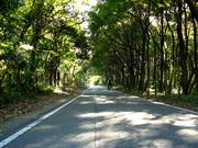 雑木林(3)