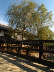 川と橋と柳(1)