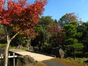日本庭園(4)