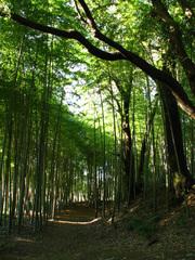 坂野家住宅の自然(2)