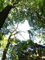 坂野家住宅の自然(3)