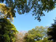 坂野家住宅の自然(1)