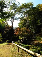 坂野家住宅 庭園
