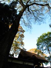 坂野家住宅 入り口(1)