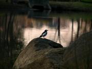 小鳥(1)