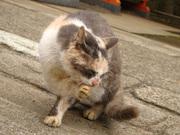 猫ちゃん(2)
