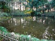カワセミちゃんが出現した池