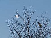 不明な鳥と月とのツーショット