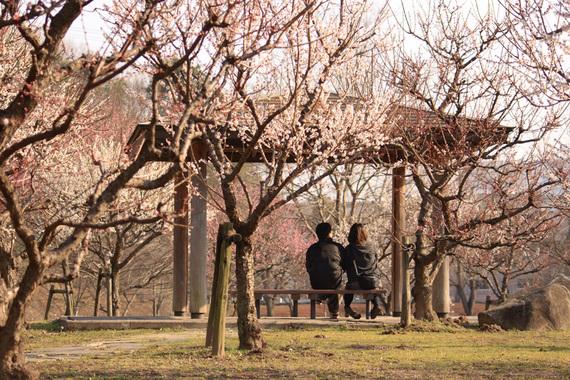 梅を見ながら寄り添うカップル