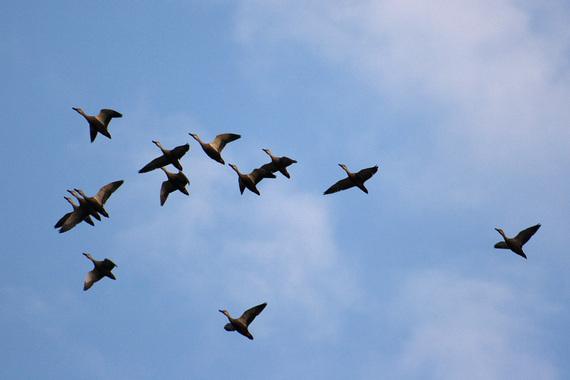 飛んでいる鳥さんたち