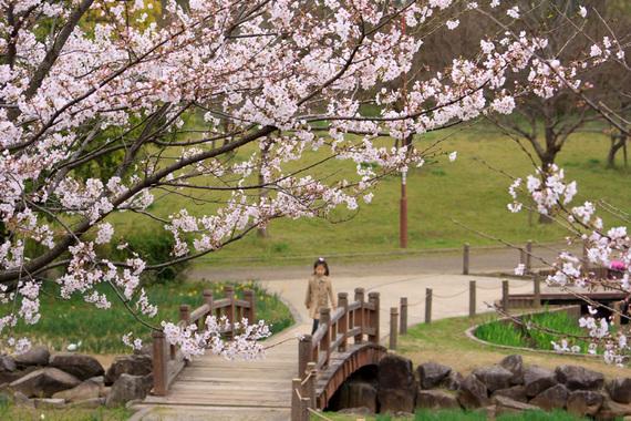 四季の里公園のソメイヨシノ(3)