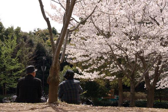 おじいちゃんおばあちゃんが見る桜