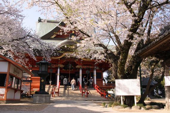 布施弁天の桜