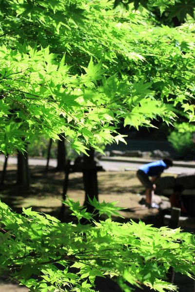 新緑(4)