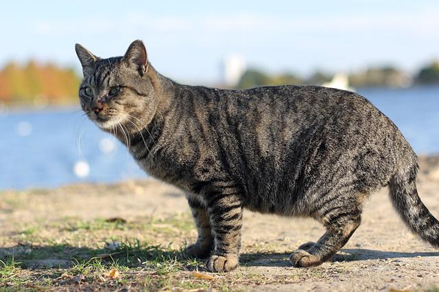 ネコ(0)