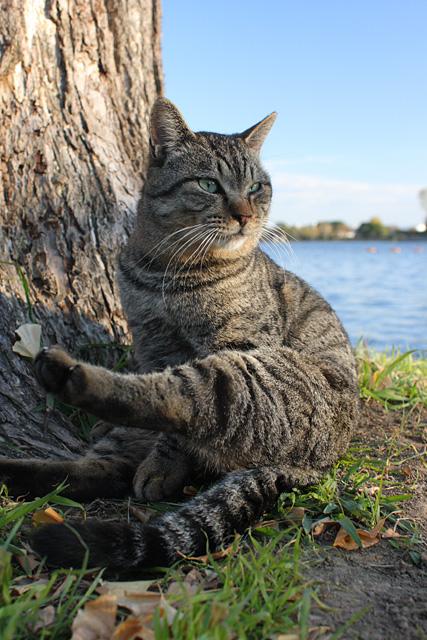 ネコ(1)