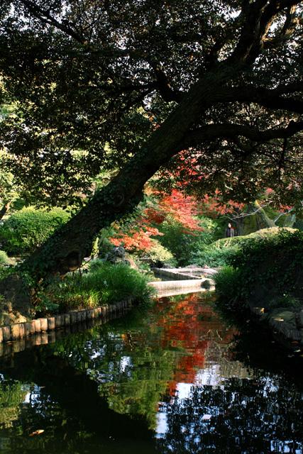 水面に写った紅葉