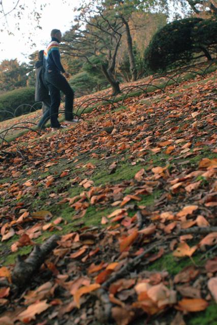 低空からみた落ち葉