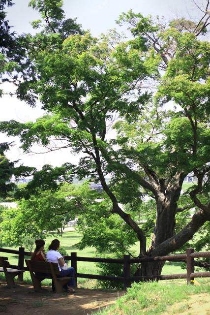 高台にある公園の風景