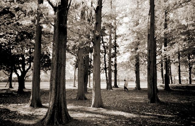 たくさんの木