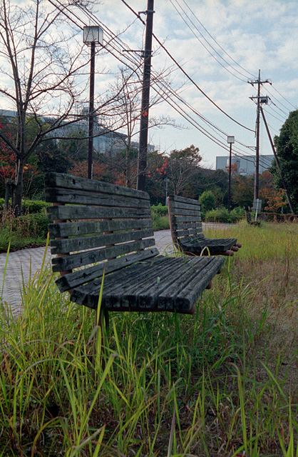 近所の公園(2)