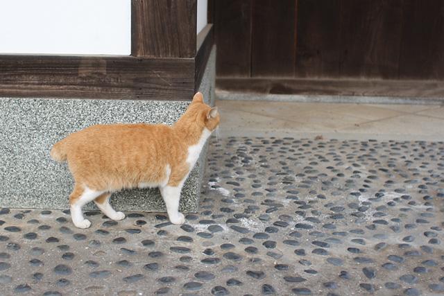 ネコ(5)