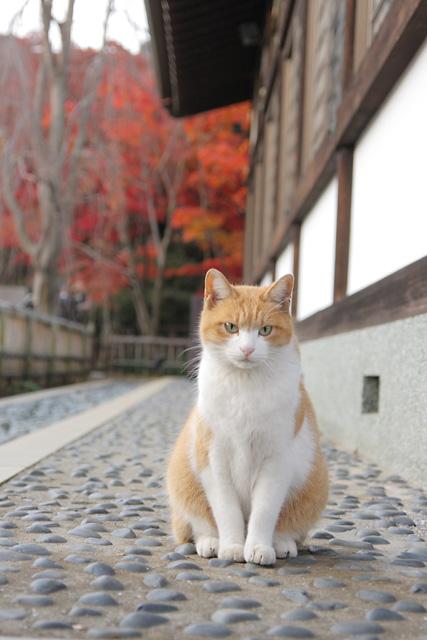 ネコ(4)
