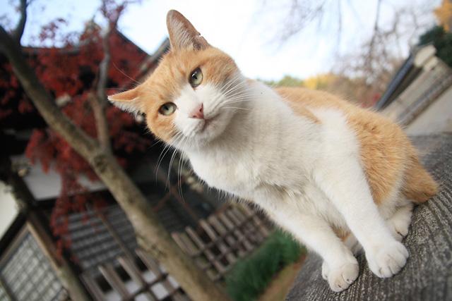ネコ(7)