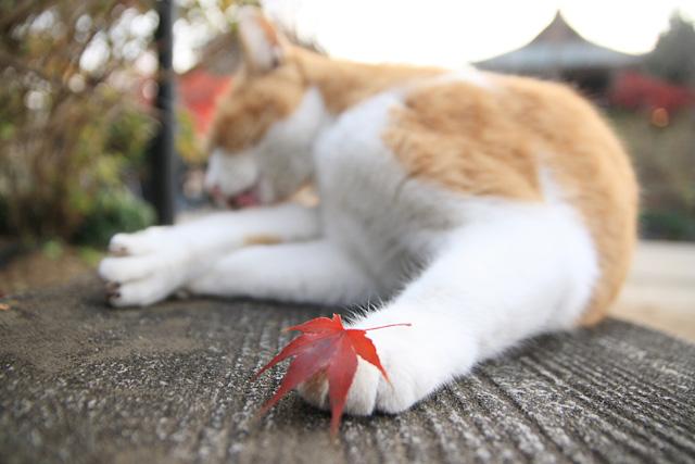 ネコ(9)