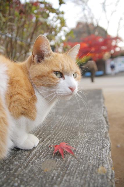 ネコ(8)