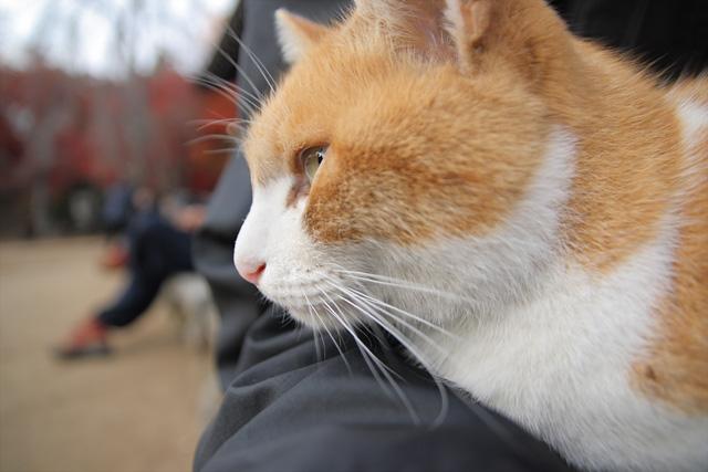 ネコ(10)