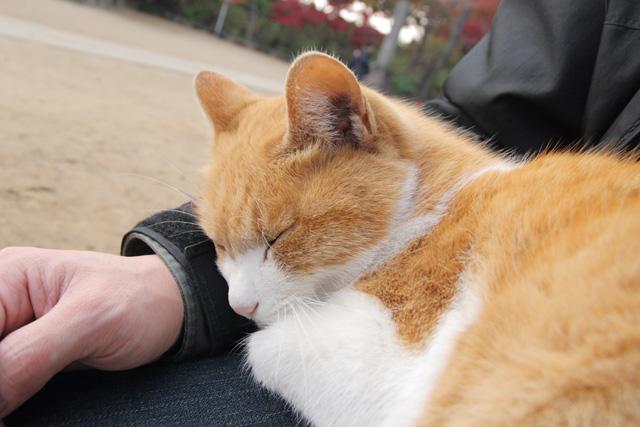 ネコ(11)