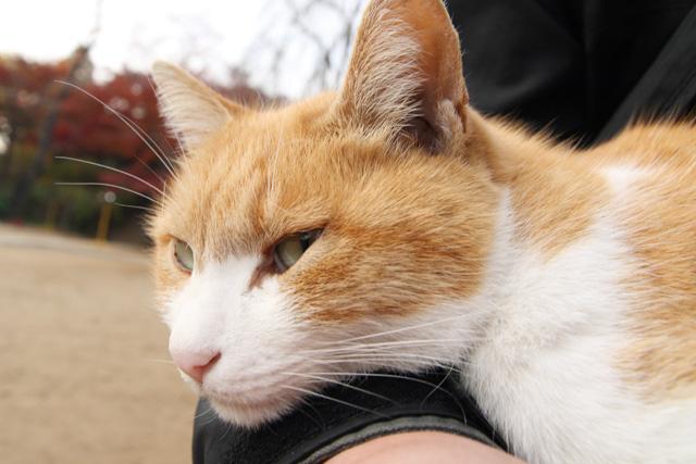 ネコ(12)