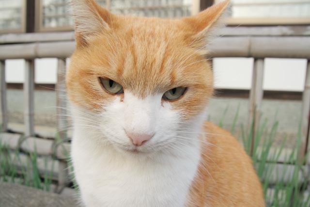 ネコ(13)
