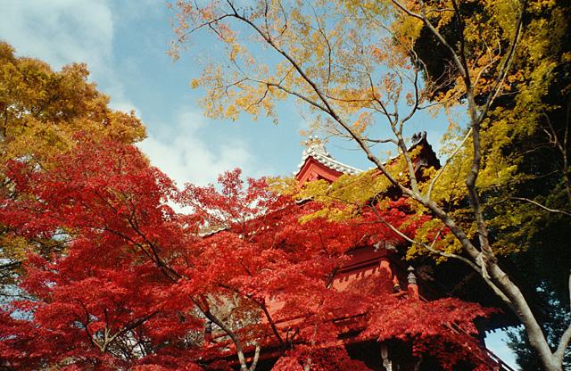 本土寺の正門