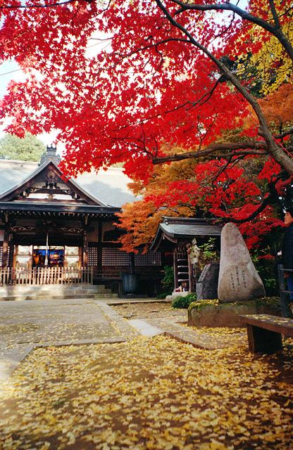 本土寺の中間地点