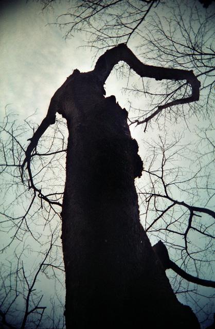 大樹に宿る木霊