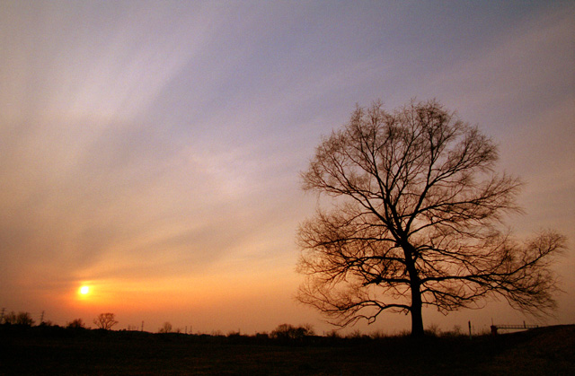この木なんの木(3)