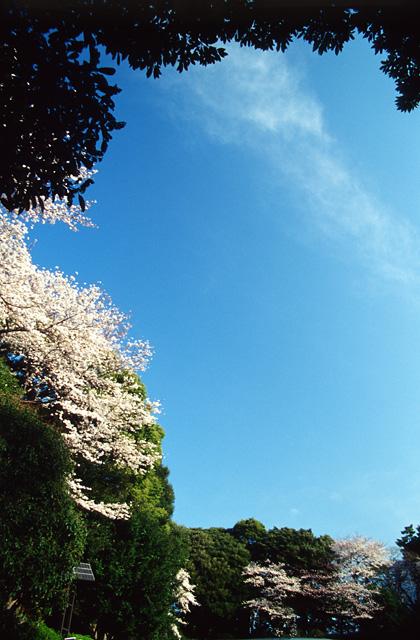 桜空(3)