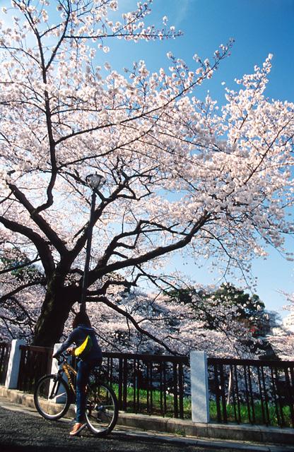 桜の咲く頃に(3)