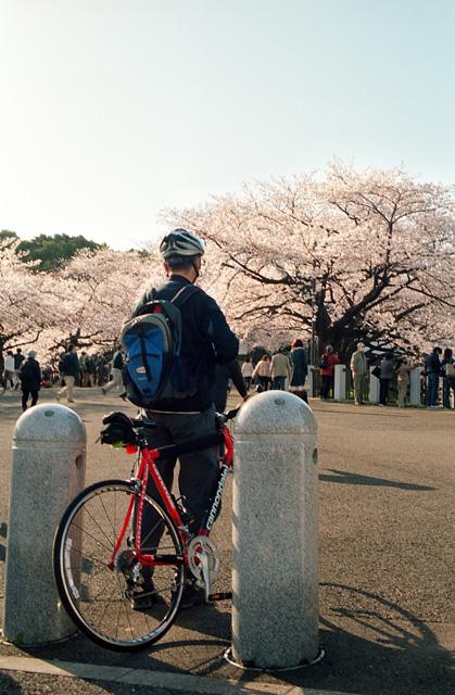 桜の咲く頃に(4)