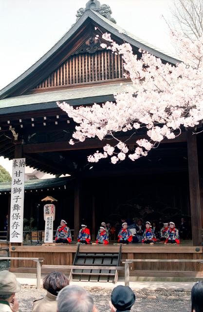 桜 @ 靖国神社(5)