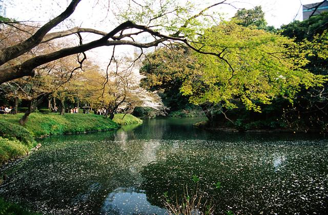 桜2008 のすべて(1)