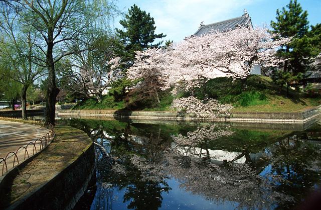 桜2008 のすべて(4)