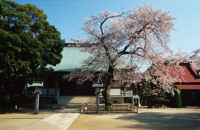 桜2008 のすべて(2)