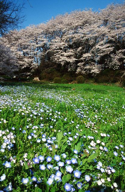 桜2008 のすべて(6)