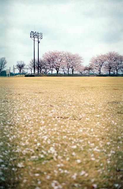桜2008 のすべて(9)
