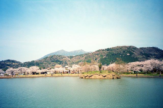 桜 @ 筑波山麓・北条大池(2)