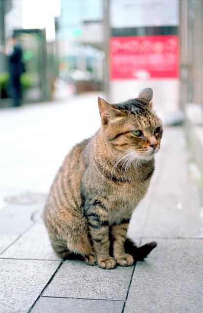 ショーウィンドウを眺めるネコ